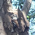 Arboreal Termites