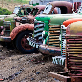 Multiple old farm truck lined up in a row. by Gale Perry - Transportation Other ( old, farm trucks, multi color, lined up in row, front ends,  )