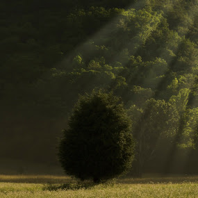 by Brook Kornegay - Nature Up Close Trees & Bushes ( tree, smoky mountain, light,  )