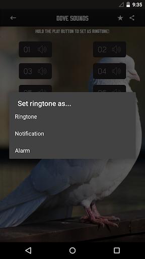 玩免費音樂APP|下載鸽子的声音 app不用錢|硬是要APP