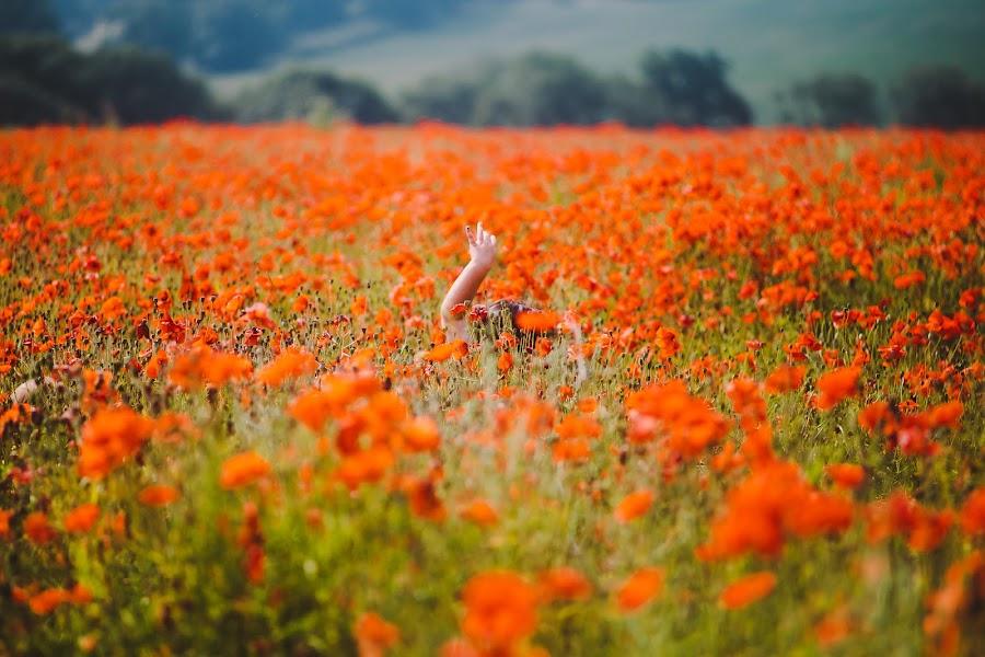 Lost In A Poppy Field by John Loydall - Landscapes Prairies, Meadows & Fields ( field, poppy )
