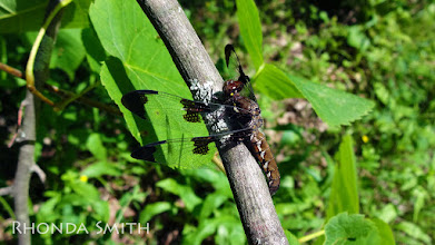 Photo: A close up of a dragonfly on a tree, when we went out hiking in one of the trails.
