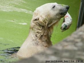 Photo: Ich koennte ja Ballspielen ;-)