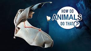How Do Animals Do That? thumbnail