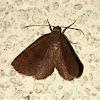 Black-dotted Ruddy Moth