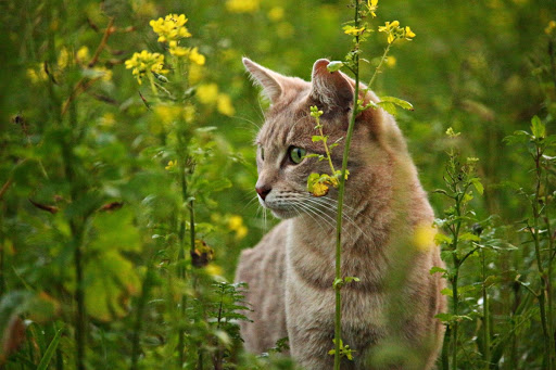 Can Pets Get Hay Fever? How to Spot the Tell-Tale Signs and Help Your Furry Friend When Pollen Strikes