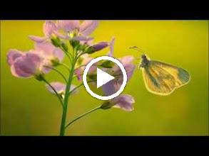 Video: A. Vivaldi  Concerto for oboe, violoncello, strings   b.c. in G minor (RV 812)   Modo Antiquo -