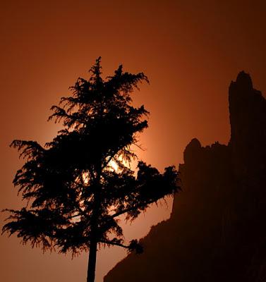 Eclissi ... di albero! di Ciotta