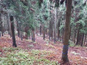 下に舗装林道が見えてきた