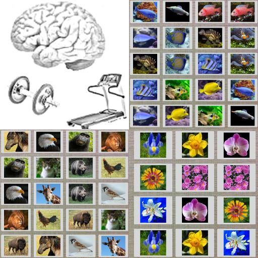 解謎App|Fun Memory Practice LOGO-3C達人阿輝的APP