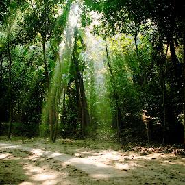 by Tarik Sazal - Nature Up Close Trees & Bushes