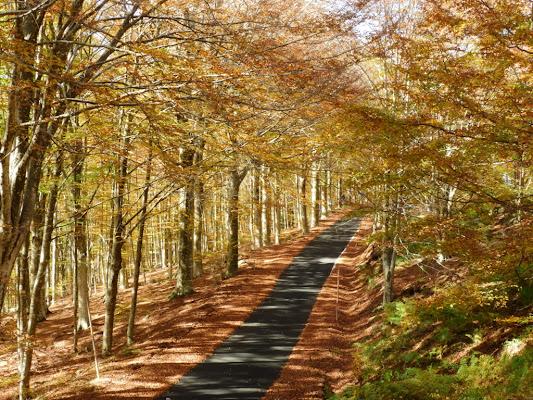 La strada si colora d'autunno.
