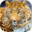 Wildlife An.. file APK for Gaming PC/PS3/PS4 Smart TV