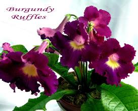 Photo: Burgundy Ruffles