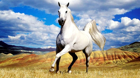 Horse Live Wallpaper For Pc Windows 7 8 10 Mac Free Download