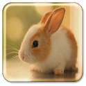 Bunny Live Wallpaper icon