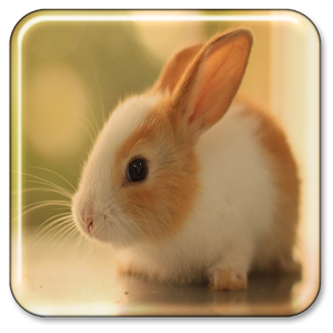 Cute Wallpapers For Blackberry Curve 8520 Bunny Live Wallpaper Apk For Blackberry Download Android