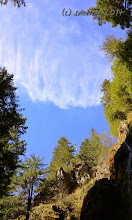 Photo: Gratitude as I look up to the sky, to the trees,to the clouds.