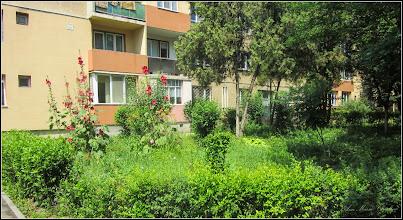 Photo: Nalbă (Alcea rosea) - de pe Calea Victoriei,  Nr.15-17 - spatiu verde intre blocuri - 2017.07.08