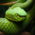 Snake Wallpapers icon