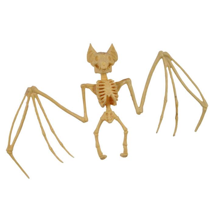 Fladdermus skelett