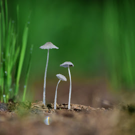 by Weli Pramono - Nature Up Close Other Natural Objects