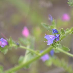 Skoonheid by Lana Kirstein - Nature Up Close Gardens & Produce ( takkie blare kleure deinserig sagte )