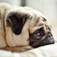 Puppy Wallpapers HD, Cute dog beautiful pictures APK