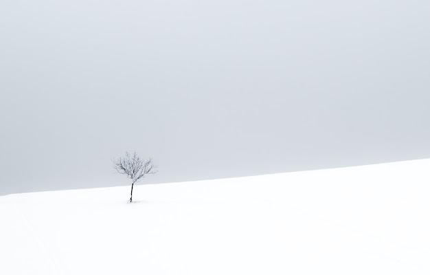 Solitario di Paolo Patella