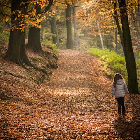 Discovering the forest by Arti Fakts - Landscapes Forests ( 24-120mm, arbre, promenade, d750, eva, forêt, bois, nikon, artifakts, autmone, mont-de-l'enclus,  )