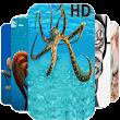 Octopus Wallpapers offline icon