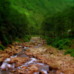 Flowing through the forests... by Sannit Hazra - Landscapes Forests