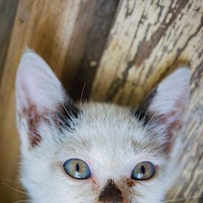meow by Empty Deebee - Animals - Cats Kittens ( kitten, cat )