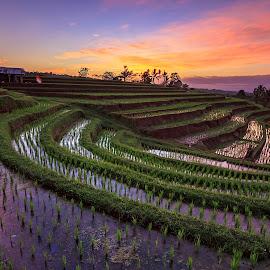 rice terrace by Kori Wardhana - Uncategorized All Uncategorized
