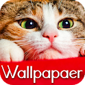 Wallpaper Cat Collection icon