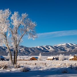 The Tree and Neighborhood by Chad Roberts - Landscapes Mountains & Hills ( snow, frost, tree, houses, frozen, winter, cold )
