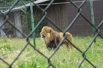 Foto: Lejonkungen??