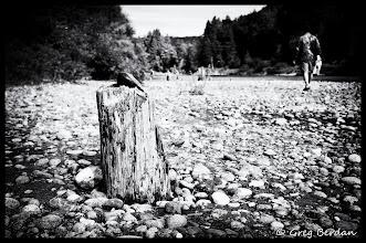 Photo: Stone on stump