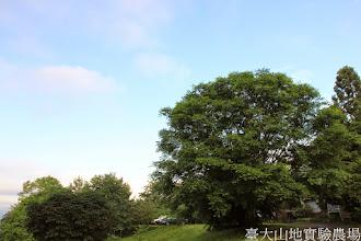 Photo: 拍攝地點: 梅峰-伴月坡 拍攝植物: 青楓 拍攝日期: 2014_05_27_FY