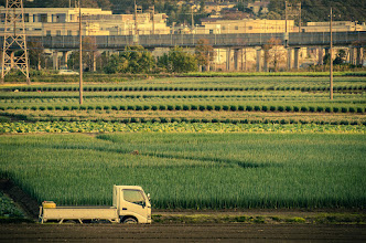 Photo: Fields ready for harvest in Chiba Prefecture, Japan