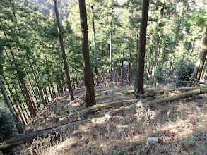 植林帯の斜面