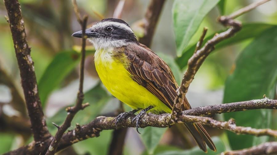 by Fares Ragunath - Animals Birds