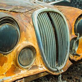 Grilling by Michael Mercer - Transportation Automobiles ( rust, headlights, classic cars, grill, jaguar )