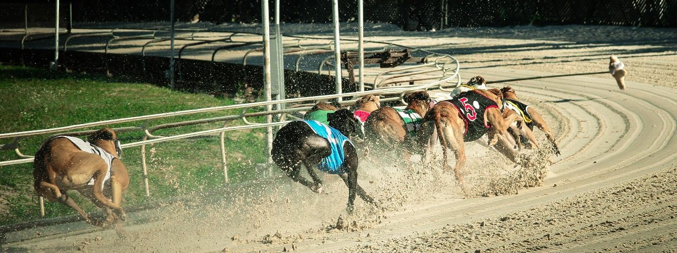 The UK & Ireland's biggest greyhound races