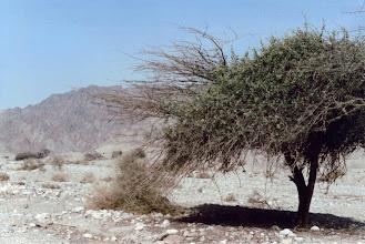 Photo: #003-Le désert du Néguev