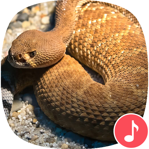 Appp io - Rattlesnake Sounds - Apps on Google Play