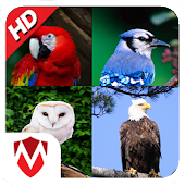 60 Bird Sounds & Ringtones