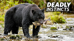 Deadly Instincts thumbnail