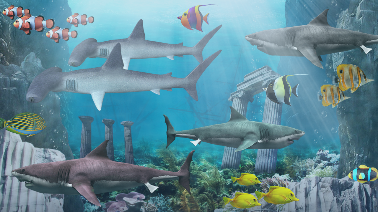 3d Wallpaper Live Fish Shark Aquarium Live Wallpaper Android Apps On Google Play