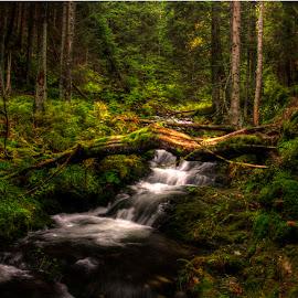 by Michal Valenta - Landscapes Forests